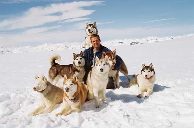 Paul Walker junto a los perros de la película Bajo Cero.