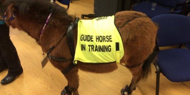 El primer caballo guía.