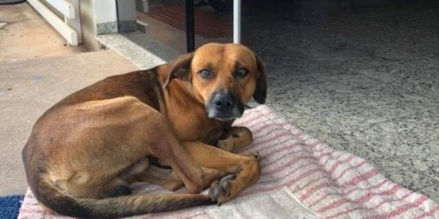 El cachorro Campeon en las puertas del hospital