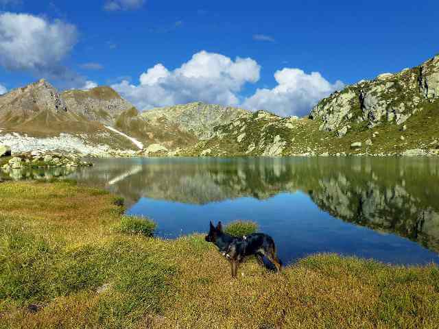 Perro junto a un lago