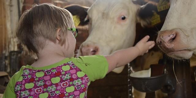 Niña con síndrome de Down dando de comer a unos animales en una granja