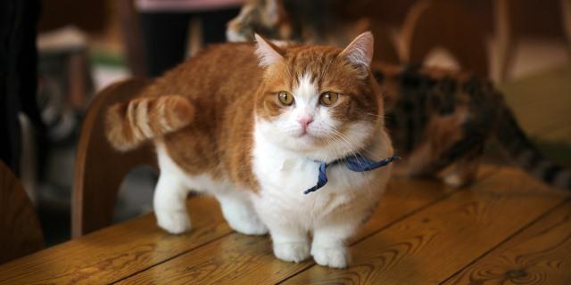 Curiosidades sobre las colas de los gatos