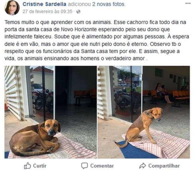 imagen del cachorro Campeón posteada en Facebook