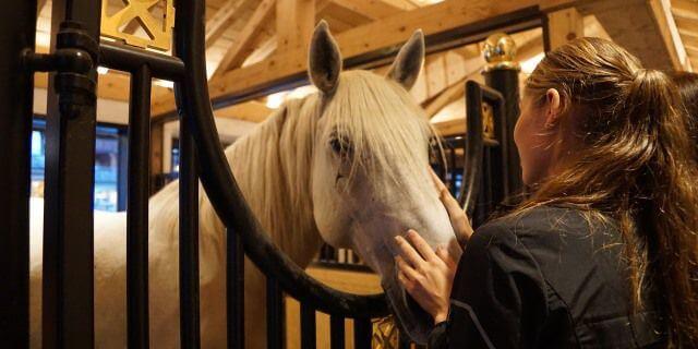 Como acariciar a un caballo