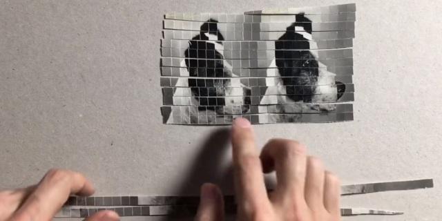 Imagen del perro duplicado (Foto: Vídeo de Youtube).