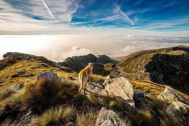 Perro en una montaña después de hacer senderismo