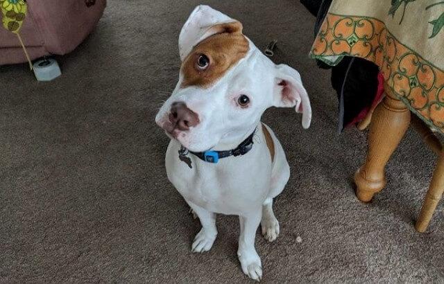 Ivor el cachorrito sordo ahora es un perro totalmente feliz y rehabilitado