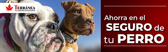 seguro veterinario para perro