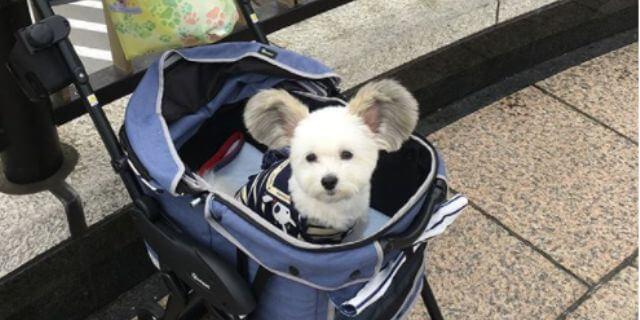 Goma, el perro Mickey Mouse