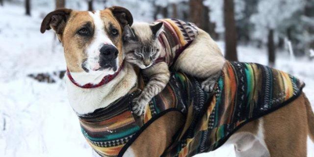 Henry y Baloo, perro y gato amigos y famosos en Instagram