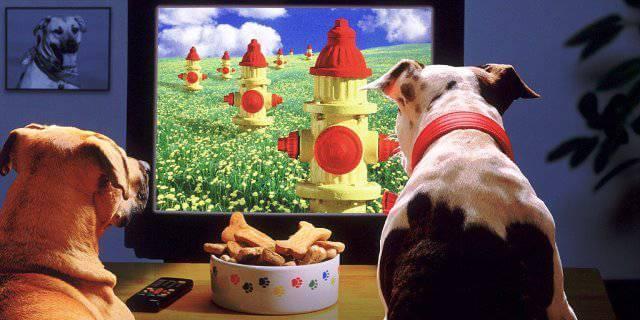 Perros ven la televisión