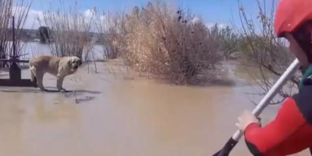 Rescate de un perro en el río Ebro (Foto: Diputación de Zaragoza).