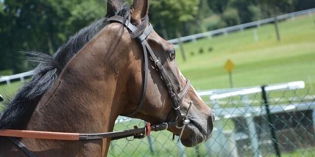 Como poner las riendas a un caballo