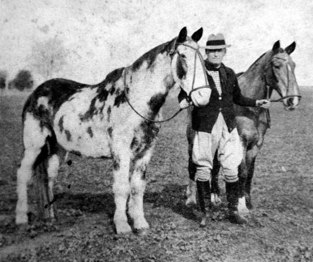 Gato y Mancha, los caballos criollos que hicieron historia