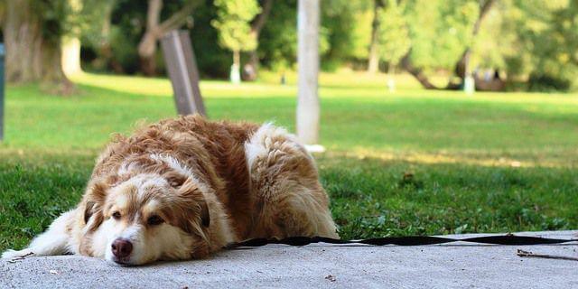 Perro descansa en un parque