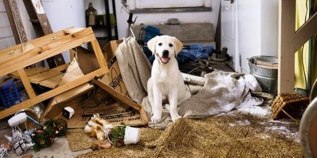 Perro en una casa desordenada.