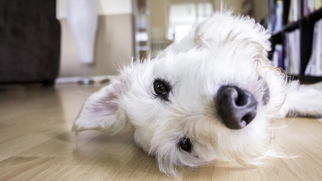 Podemos seguir varios remedios para quitar el olor a perro.