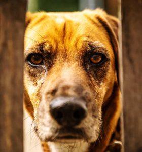 Perro mira por una valla.
