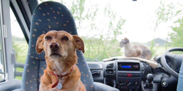 Perro en un coche al lado de una ventanilla.