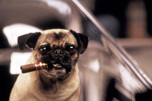 Frank, el perro de Men in Black, con un puro.