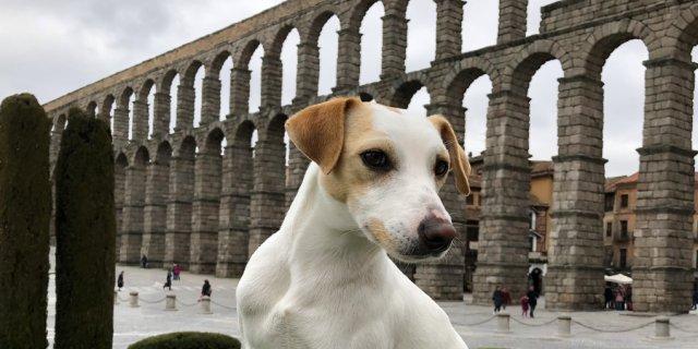 Pipper. en el Acueducto de Segovia.