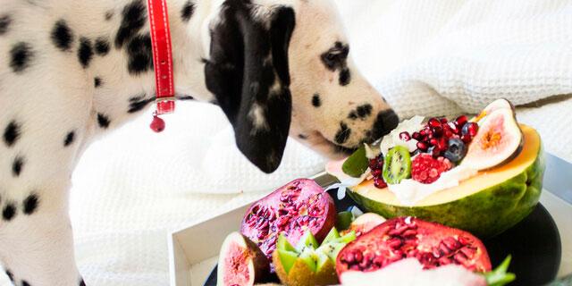 frutas para perros heladas