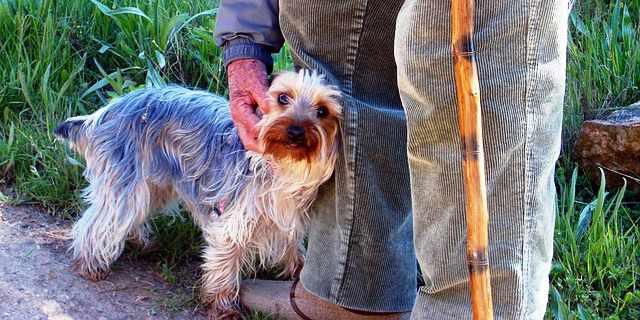 Perro junto a un anciano.