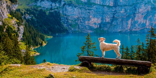 pasear con perro por la montaña