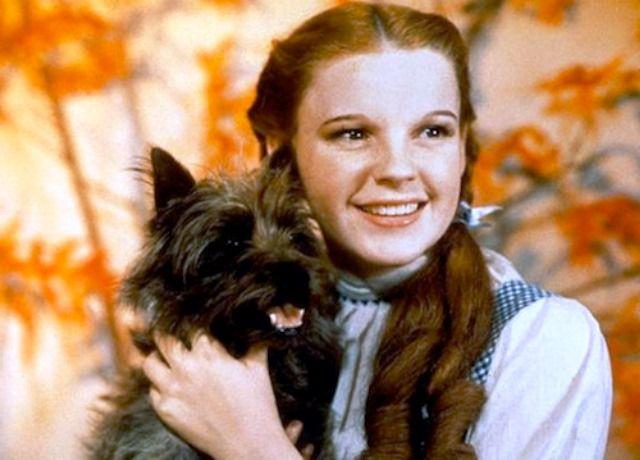 Totó, junto a Dorothy en El Mago de Oz.