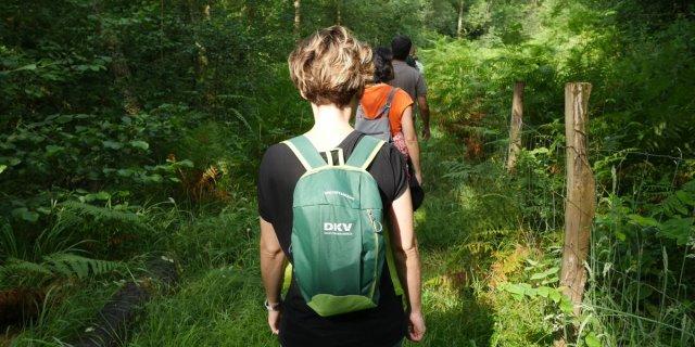 Un recorrido o baño de bosque organizado por DKV en País Vasco