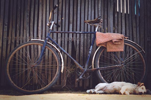 bicicleta de paseo clásica y perro