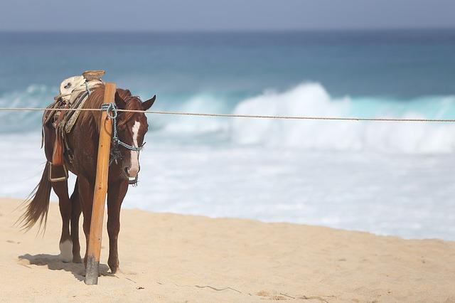 caballo al sol
