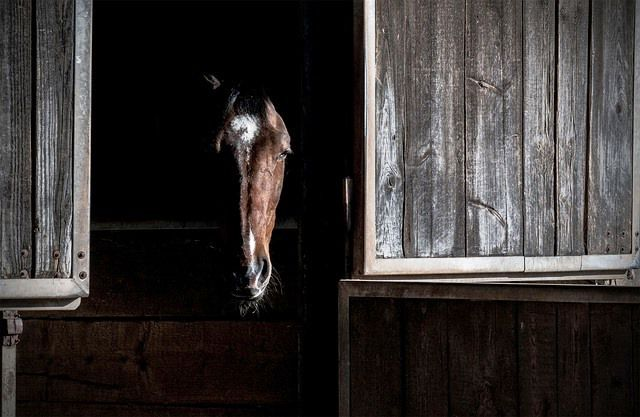 El caballo puede realizar un movimiento repetitivo de su cabeza por el mal del oso.