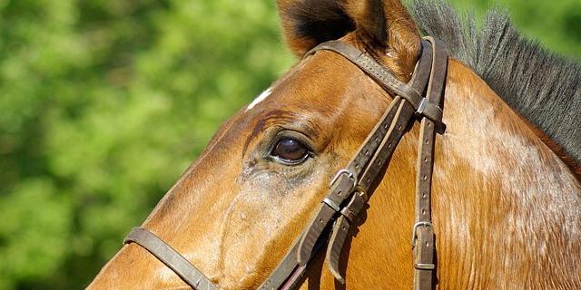 caballo expuesto a los rayos del sol que podría sufrir quemaduras