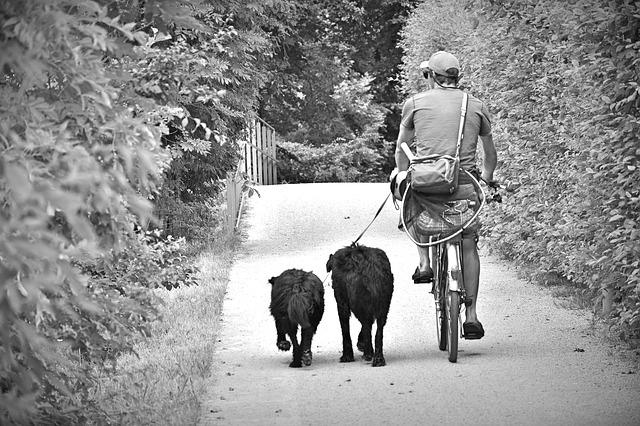ciclista con perros practicando bikejoring