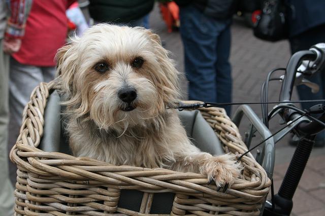 Perro sujeto en la cesta de la bici