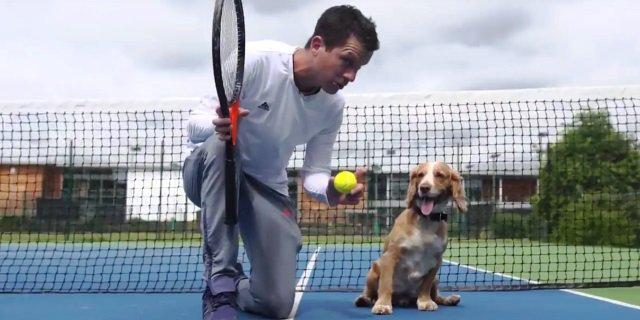 Tim Henman enseña a un perro a ser recogepelotas.