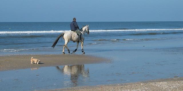 Como montar a caballo junto a nuestro perro