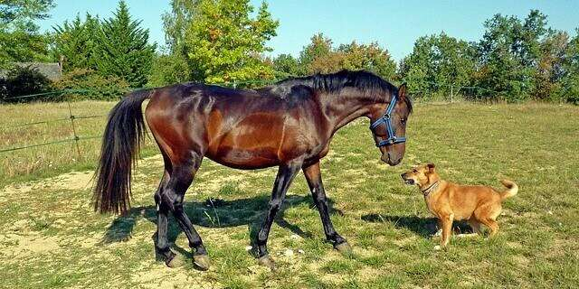 Como montar a caballo junto a un perro.