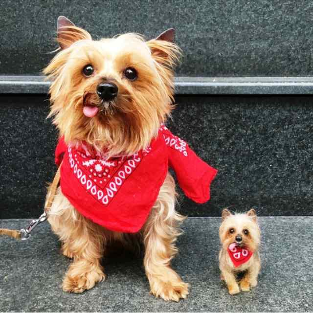 Miniatura del perro de Linda Facci junto a su perro real, Cocoa.