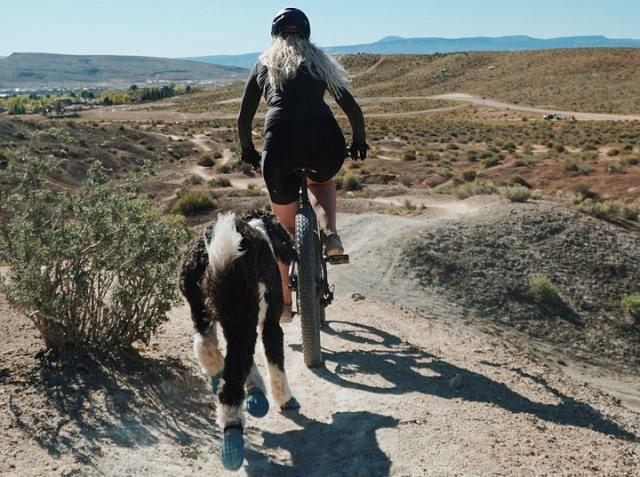 mountain bike con perro por el campo