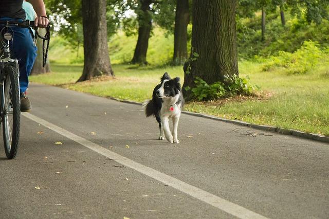 perro corriendo por el parque con su dueño pedaleando en bicicleta