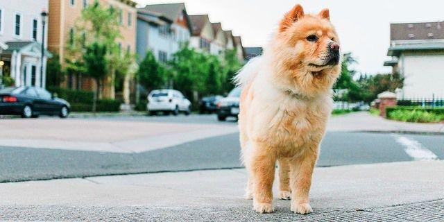 Perro en una calle.