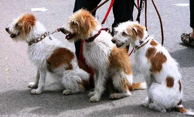 Perros sentados en una calle.