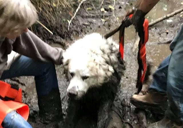puppy cuando le estaban sacando del barro de cienaga en el que estaba atrapado