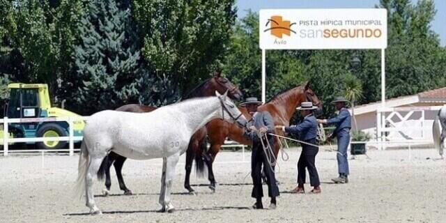XVI feria del caballo