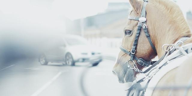 caballo en la autovía.