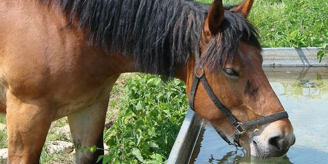 caballo deshidratado