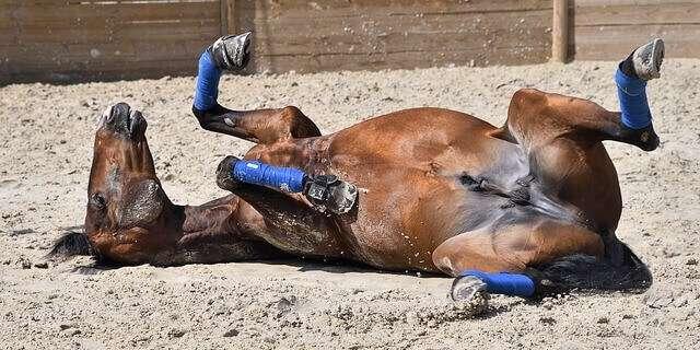 Colico en caballos.