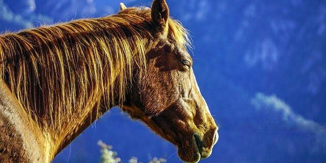 Pérdida de pelo en caballos.